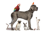 Group Of Pets - Dog  Cat  Bird  Reptile  Rabbit  Isolated On White