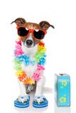 Tourist Dog With Hawaiian Lei And A Bag