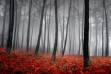 Paysage hivernal Papier Photo par Jpcasais