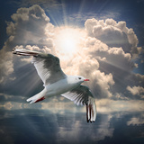 The Seagull Flying Over A Sea Against A Dramatic Sky Background From Nature