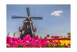 Netherland Fields