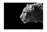 Portrait de léopard Reproduction d'art par Reddogs