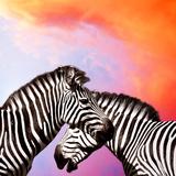 Two Zebras On The Sky Papier Photo par Yuran-78