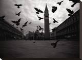 Pigeons  Venice Italy