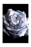 Rose With Floral Spring Tree Ornaments