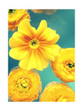 Yellow Blossoms I