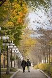 Autumn  Quebec City  Quebec  Canada