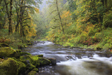 Tanner Creek  Columbia River Gorge  Oregon  USA