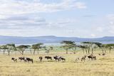 Lake Naivasha and Crescent Island Game Park  Naivasha  Kenya