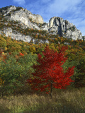 Highlighed Red Tree  Monongahela National Forest  West Virginia  USA