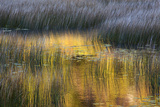 Fall Reflections in a Marsh  Acadia National Park  Maine  USA