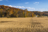 Ripe Cornfield and Barn in Brown County  Indiana  USA