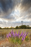 Dense Blazing Star (Liatris) and Windmill on Texas Prairie  Texas  USA