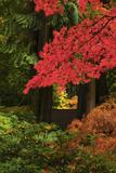 Autumn at Portland Japanese Garden  Portland  Oregon  USA