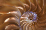 Abstract of a Nautilus Shell  Georgia  USA
