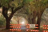 Oak Tree Drive Closed with Barriers  Savannah  Georgia  USA