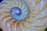 Close-Up of Chambered Nautilus Cut in Half  Oregon  USA
