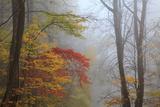 Fog and Fall Foliage  Smoky Mountains National Park  Tennessee  USA