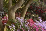 Spring Colors at Crystal Springs Rhododendron Garden  Oregon  USA