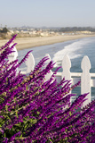 Coastal View with Flowers and Fence  Pismo Beach  California  USA