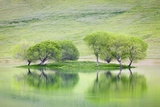 Trees on Island Reflect in Black Butte Reservoir  California  USA