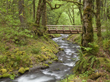 Wooden Bridge over Gorton Creek  Columbia River Gorge  Oregon  USA