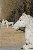 Carved Horse Statues  Changling Sacred Was  Beijing  China