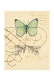 Scripted Papillon