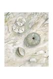 Seaside Urchin Reproduction d'art par Arnie Fisk