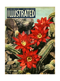 1950s UK Illustrated Magazine Cover
