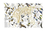 2004 Bird Migration Eastern Hemisphere Map Reproduction d'art par National Geographic Maps