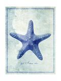 Starfish B