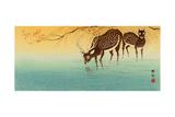 Deer in Shallow Water