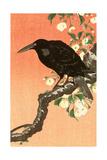 Crow Against Orange Sky