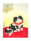 Pekingese Dog and Bush Warbler