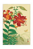 Tiger Lilies and Butterfly