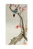 Blue Bird on a Plum Tree