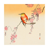 Red Bird and Cherry Blossoms