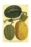 Antique Melons I