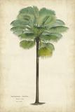 Palm of the Tropics II Reproduction d'art par Van Houtteano