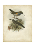 Antique Gould Hummingbird III