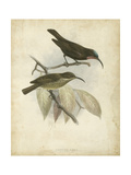 Antique Gould Hummingbird I