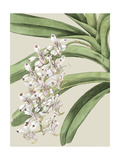 Small Orchid Blooms I