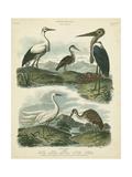 Heron and Crane Species I