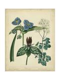 Cottage Florals V Reproduction d'art par Sydenham Teast Edwards