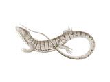 Sepia Lizard I Reproduction d'art