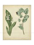 Cottage Florals IV Reproduction d'art par Sydenham Teast Edwards