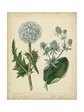 Cottage Florals III Reproduction d'art par Sydenham Teast Edwards
