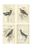 Jardine Hummingbirds