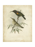 Antique Gould Hummingbird II